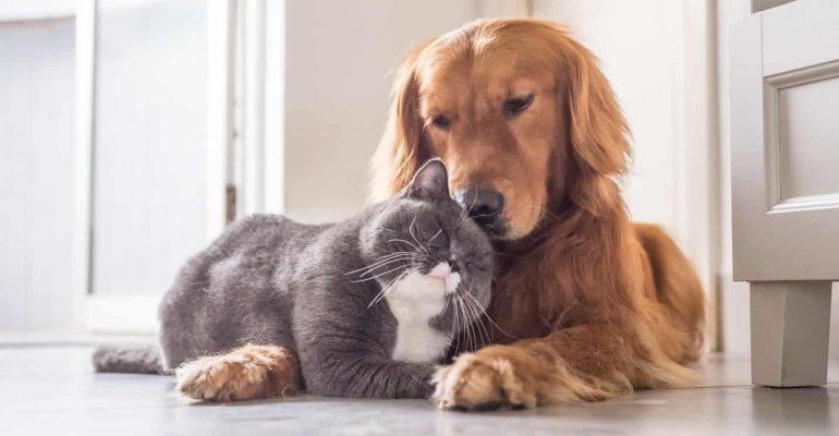 Qual bichinho de estimação preferido: gato ou cachorro?
